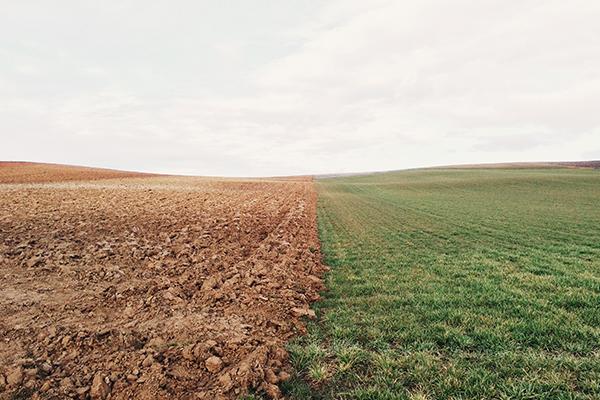 field split down the middle